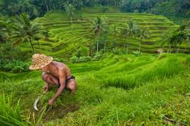 Indonésie • Ubud : Le refuge des Dieux balinais