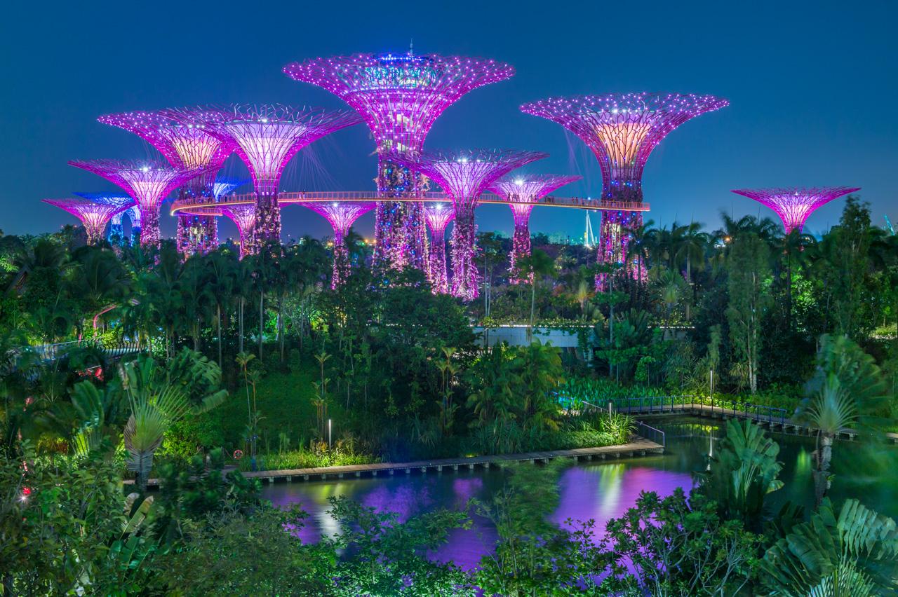 Singapour marc dozier for Jardin des zibans 2015