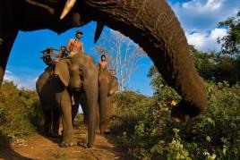 Cambodge • Ratanakiri : Eléphants sans défense